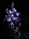 Dark Blue by kaybee