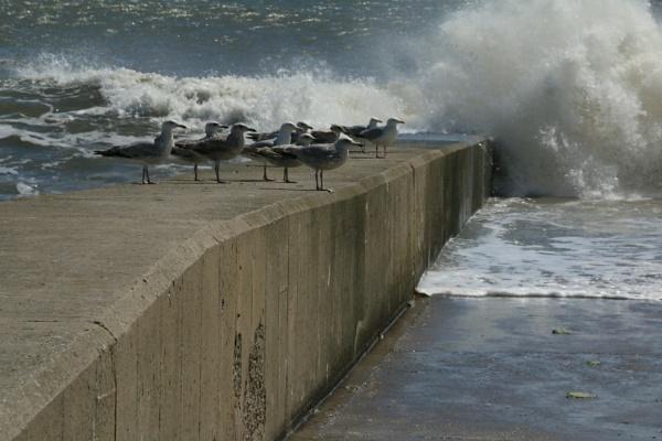 Seagulls by gunner44