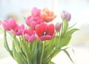 Winter Tulips by ColleenA