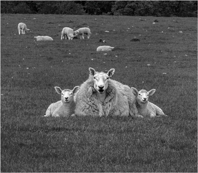 Ewe & Two