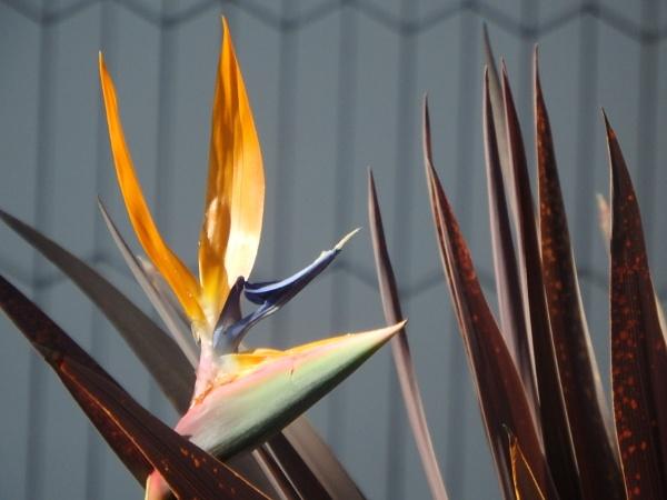 Bird of Paradise Flower by artgaz1062