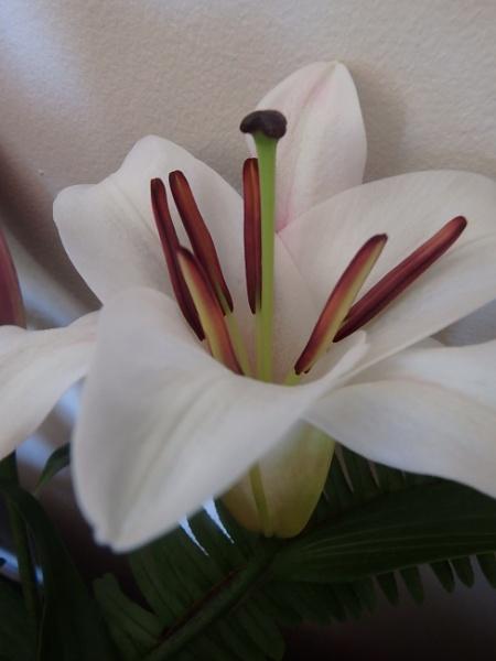 Single lily by artgaz1062