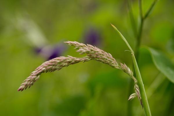 grass...