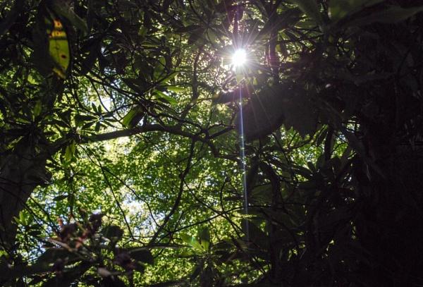 Summer sunflare
