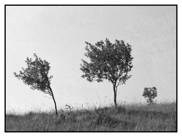 Blown by the wind by LaoCe