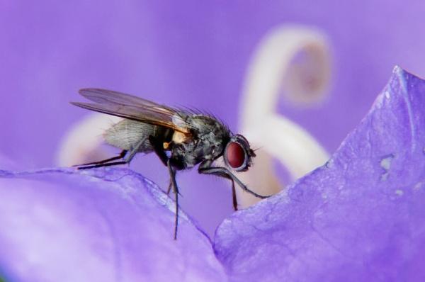 Fly in Perusmäki by hannukon
