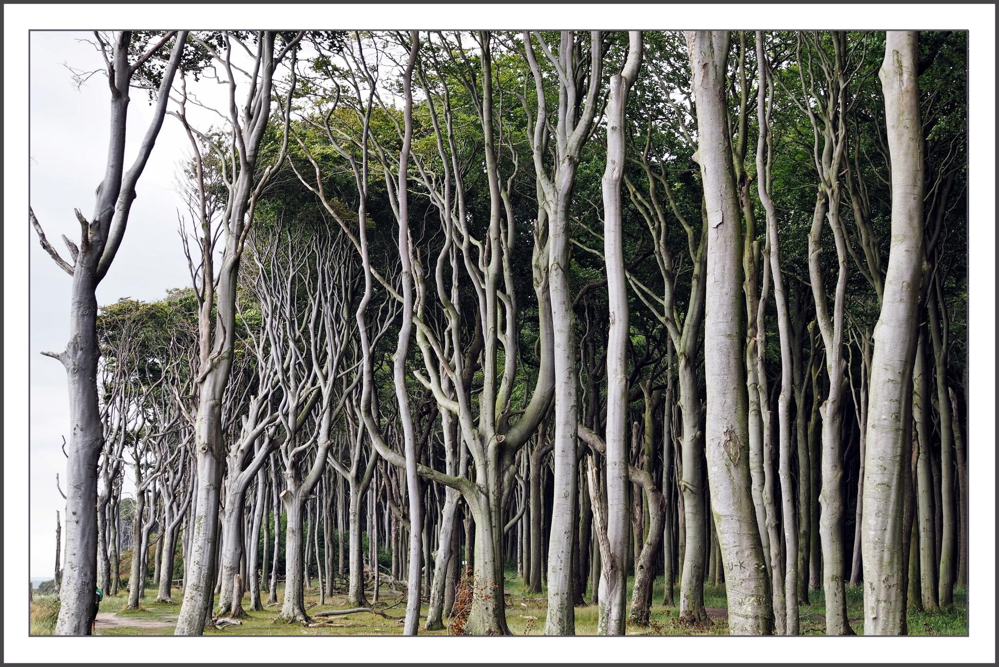 Trees At The Coast
