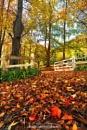 Matcham Autumn by kmorgan3