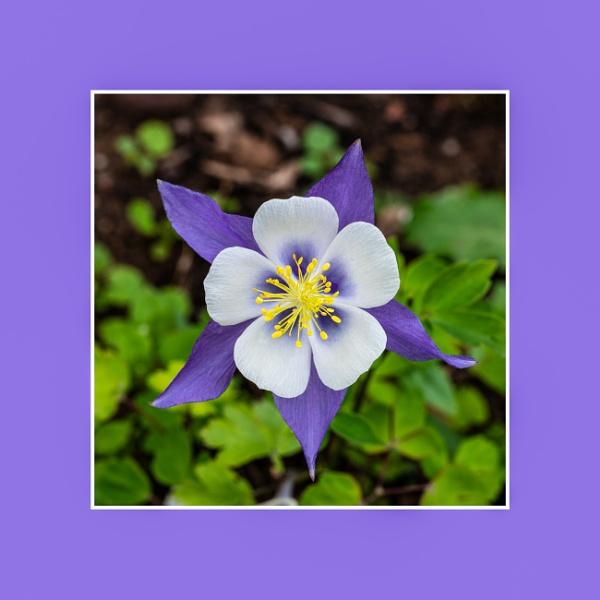 Flower by trickydicky