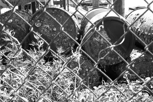 "~ \""Mollusked Barrels thru Fence III\"" by LexEquine"
