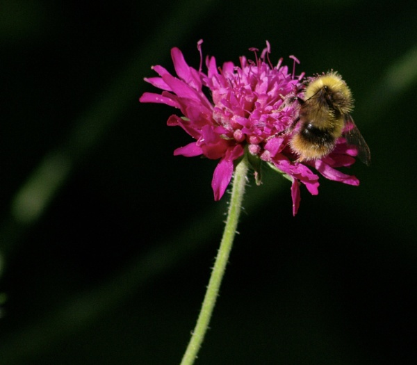 Bumble Bee by Art2105