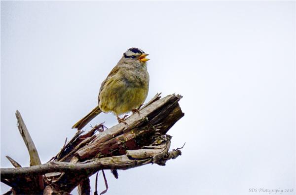 Happy Sparrow by Daisymaye