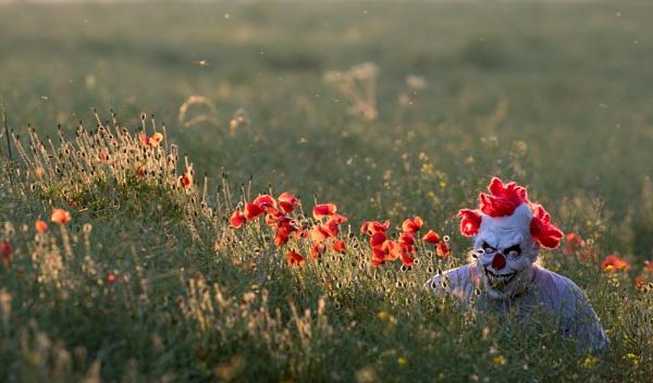 Field. by stu8fish