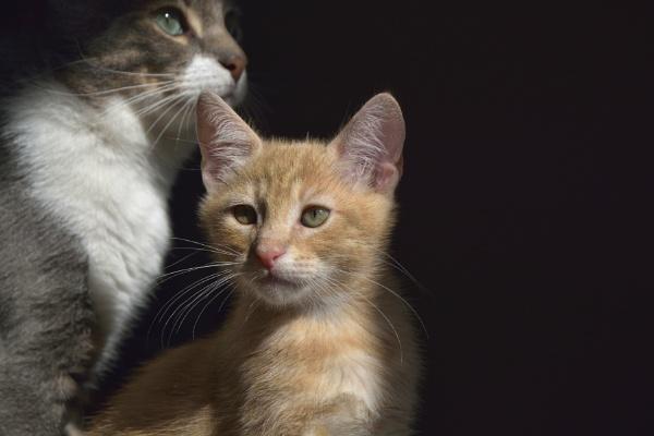My kitten 3 by luminus