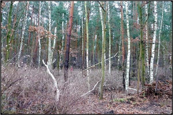 fall grove by FabioKeiner