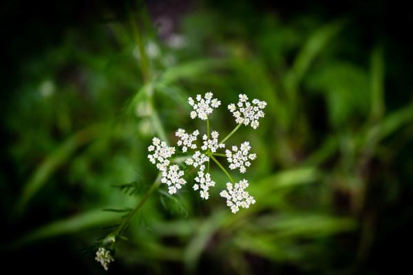 Petals by rninov