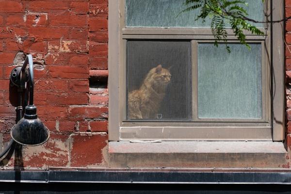 Queen Street Cat by LGHSTF