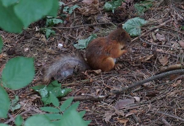 Dirty squirrel by SauliusR