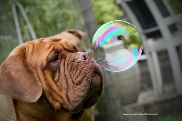 Bubble by imagesbystephendavis