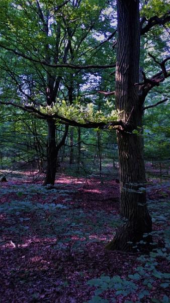 POLAND - Nature\'s Impressions No.98 by PentaxBro