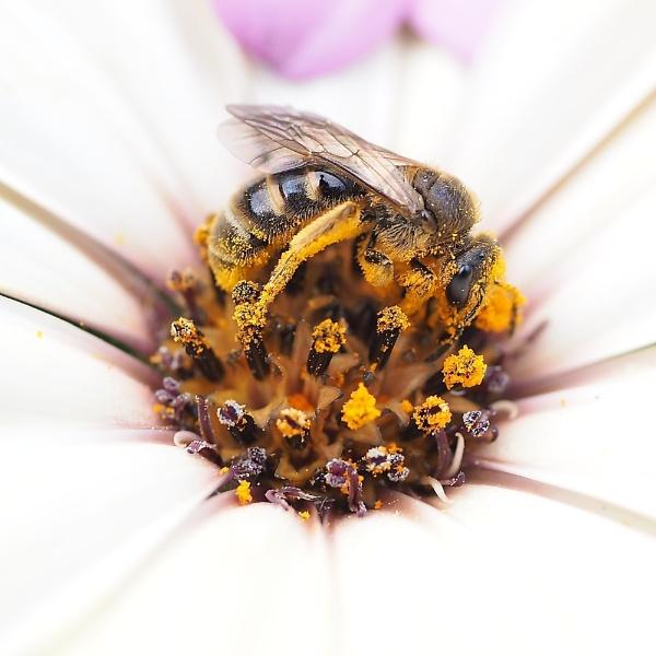 Buzz by cattyal