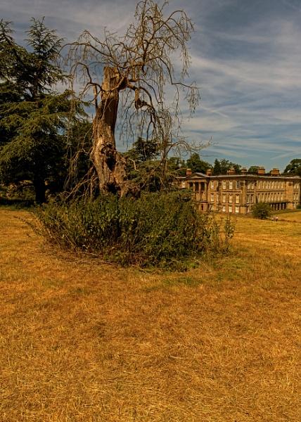 Dead Tree at Calke Abbey by mmart