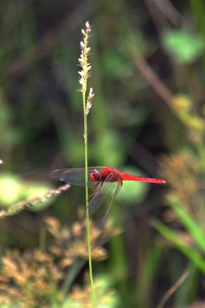 Red DF by prabhusinha
