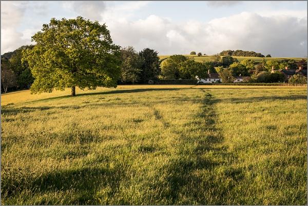 Path through the Meadow by Otinkyad