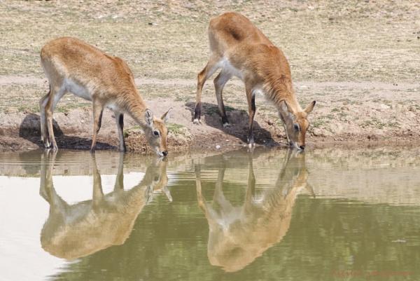 Antelope Reflections by Alan_Baseley