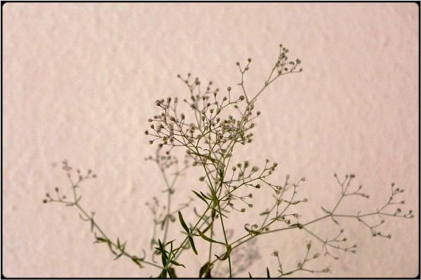 dry weeds by FabioKeiner