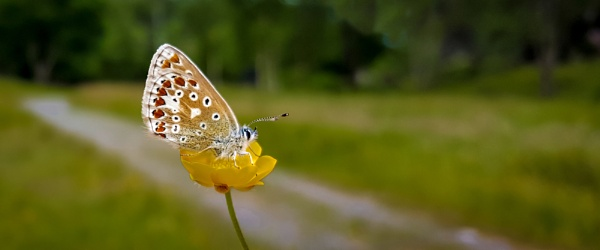 Butterfly & Buttercup. by Ray12