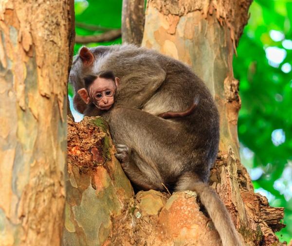 A mother\'s love....kodaikanal by rids123