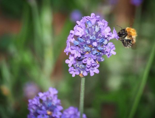 The Pollenator by DaveRyder