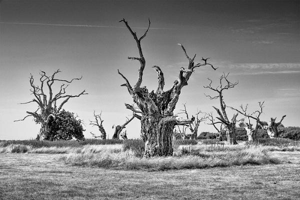 Mundon Oaks by Les_Cornwell