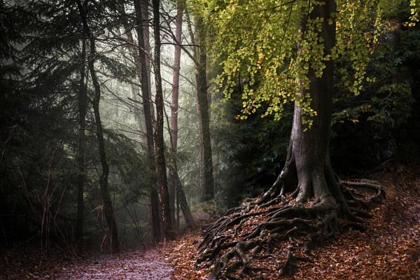 Autumn by leicablue
