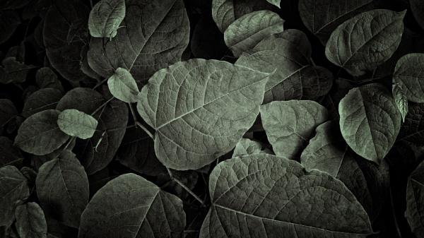 city leaves #2 by leo_nid