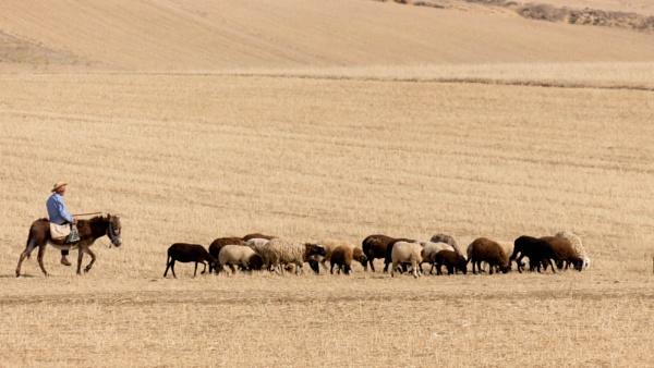 sheep boy by Lakkou