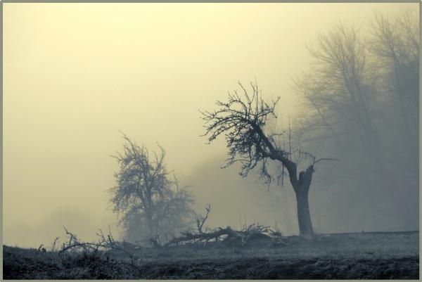 Broken Trees by kw