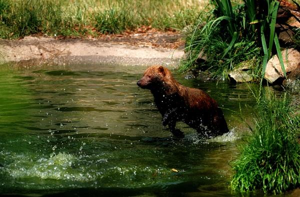Bushdog  bathtime by oldham