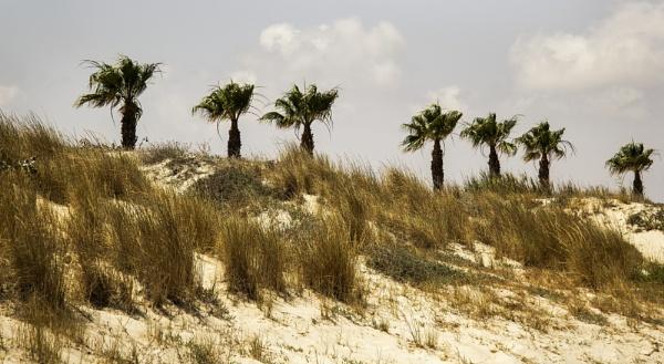 Palms of Horadada by Irishkate