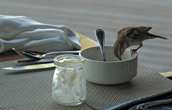 Finishing my breakfast! by JuBarney