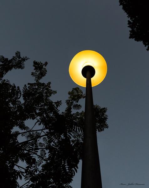 Lamp in summer night.