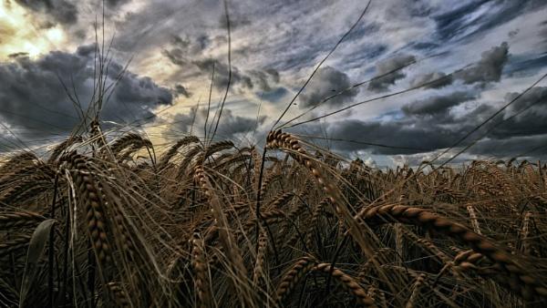 The field by opiumhaze