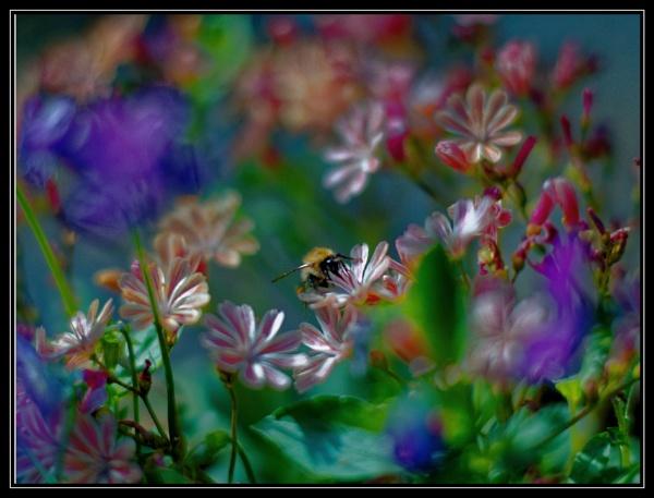 Chroma Buzz by Shedboy