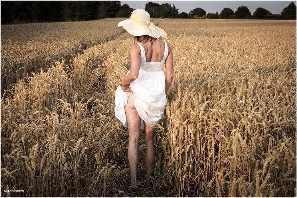 Harvest Time by SpiritDarco