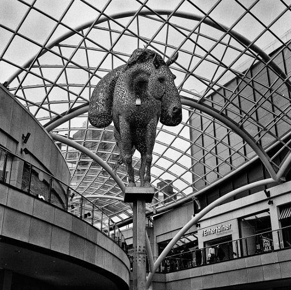 Equus by philstan