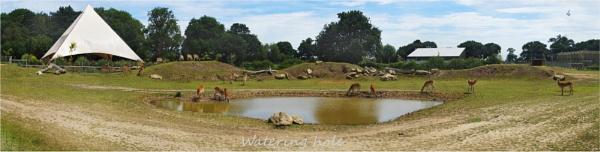 Watering hole by C_Daniels