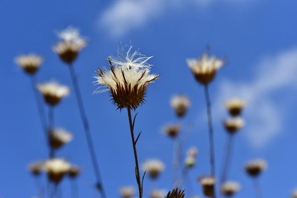 Mountain wild flowers by Savvas511