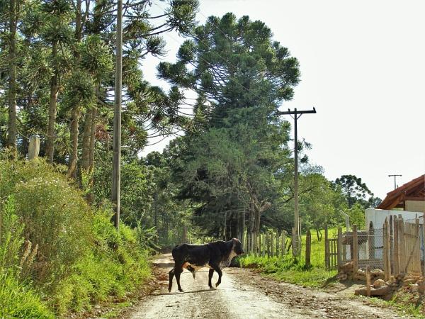 BRAZIL - Back Roads Vista No.13 by PentaxBro