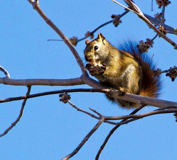 Squirrel! 12o-clock high! by Aeros